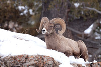 Yellowstone in Winter--2009-3456.jpg